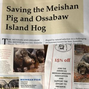 Saving The Meishan Pig