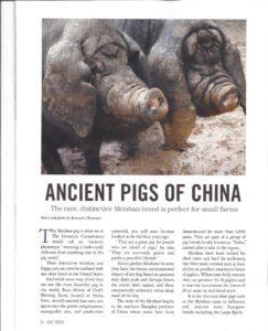 Meishan Ancient Pigs of China