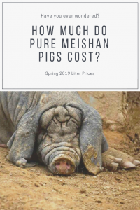 What do Meishan Pigs Cost