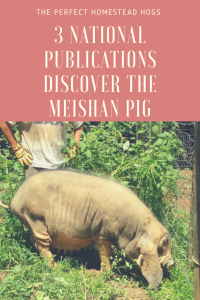 Meishan Pigs in National Magazines